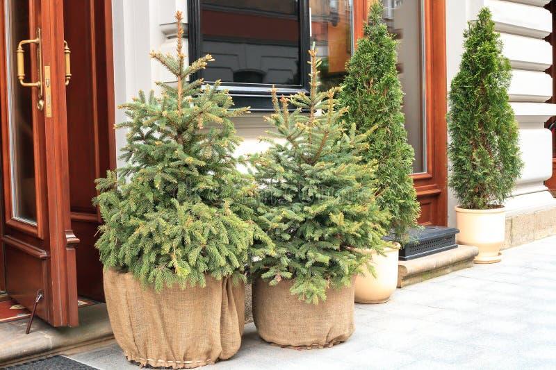 Árvore de abeto pequena sempre-verde em pasta do Natal perto da casa, decoração dos feriados fotografia de stock royalty free