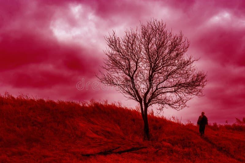 Árvore de abricó só em um monte e em um caminhante só que andam acima ao esqui coral imagem de stock royalty free