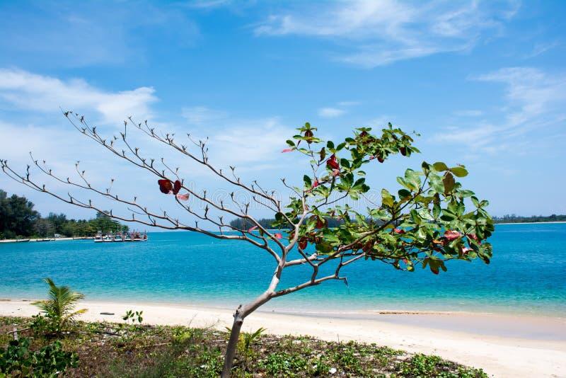 Árvore de amêndoa do mar com oceano fotografia de stock royalty free