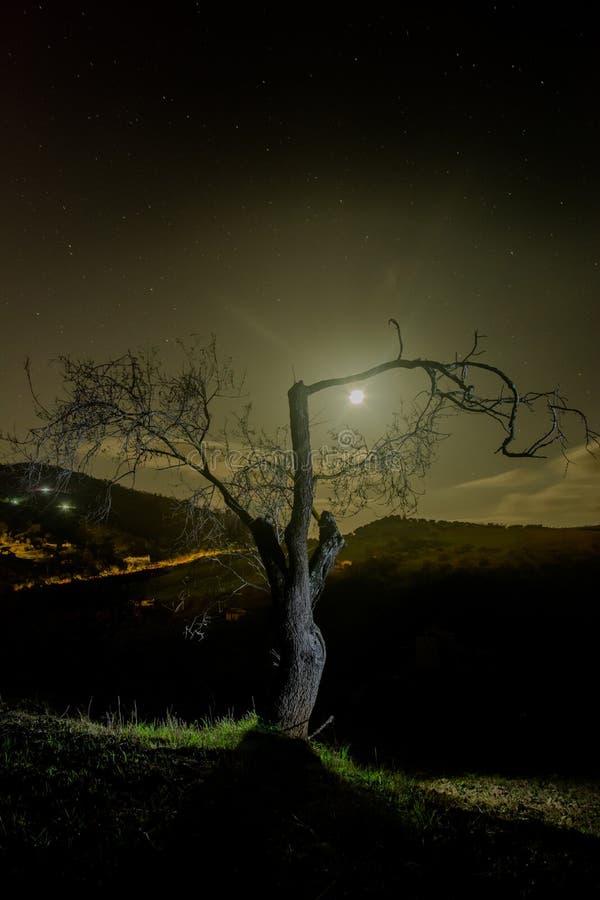 Árvore de amêndoa na noite fotografia de stock