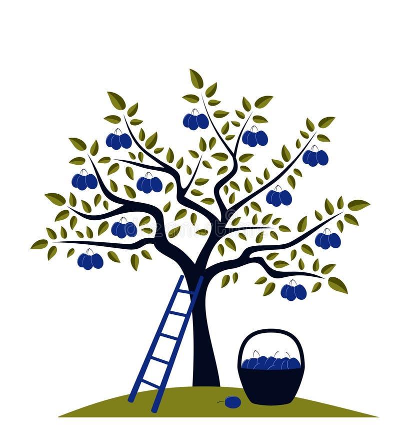 Árvore de ameixa ilustração royalty free