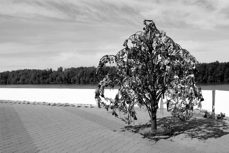 Árvore de amor no banco de Irtysh, casamento do sol do verão de Omsk, Rússia fotografia de stock
