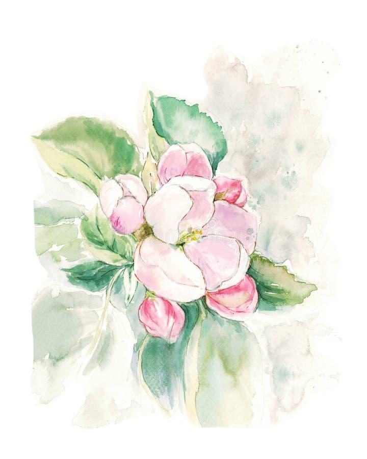 Árvore de Apple com as flores cor-de-rosa com folhas verdes ilustração stock