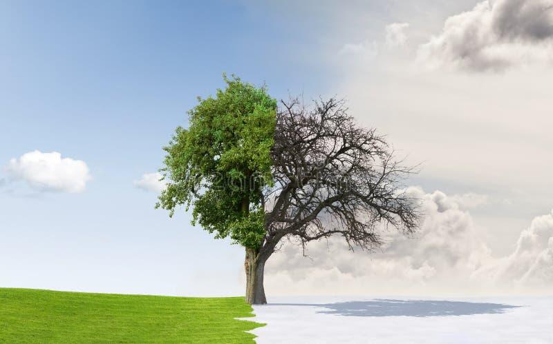Árvore de Apple em estações em mudança fotografia de stock royalty free