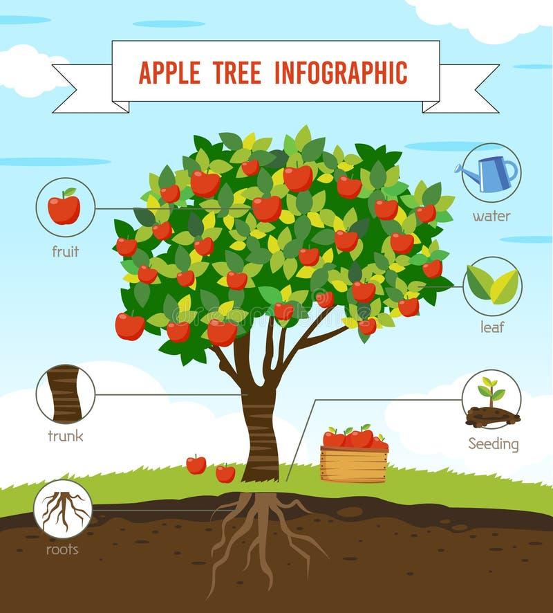 Árvore de Apple infographic ilustração do vetor