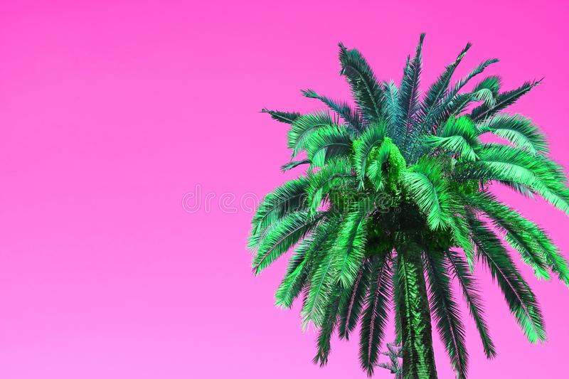 Árvore de Art Style Vibrant Green Palm do PNF no fundo cor-de-rosa vívido imagens de stock