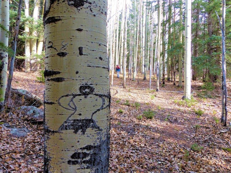 A árvore de Aspen com mulher da dança cinzelou na casca foto de stock