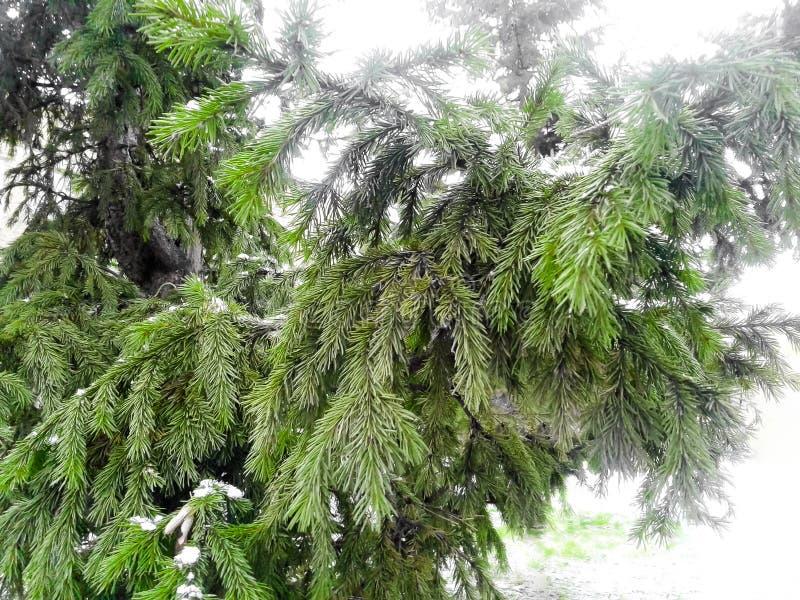 Árvore de Autumn Christmas fotografia de stock
