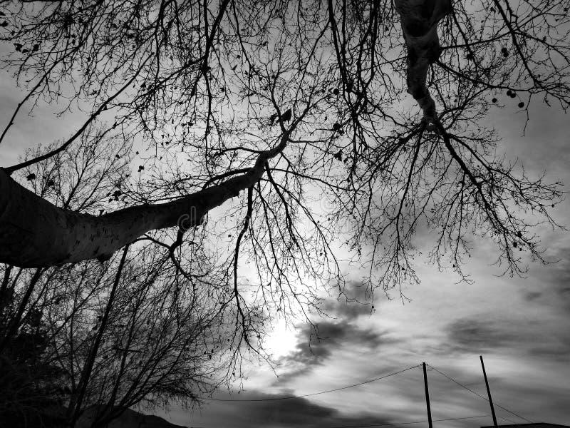 Árvore de B&W que alcança para fora ao Sun repicando fotografia de stock
