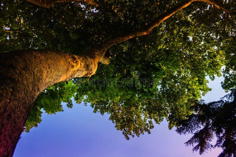 Árvore de baixo no céu do por do sol fotos de stock