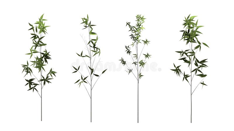 Árvore de bambu isolada no fundo branco com trajeto de grampeamento foto de stock royalty free