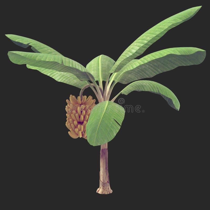 Árvore de banana 08 ilustração do vetor