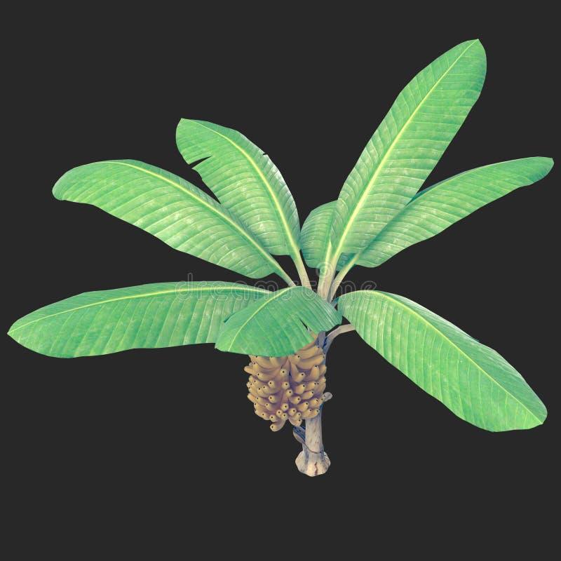 Árvore de banana 05 ilustração do vetor
