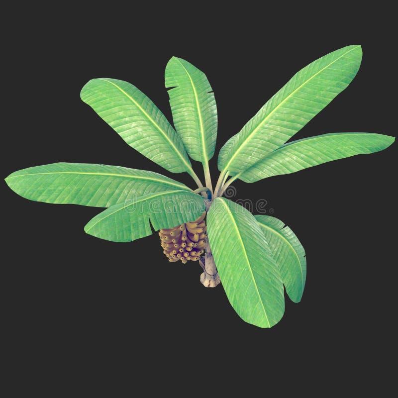 Árvore de banana 02 ilustração do vetor
