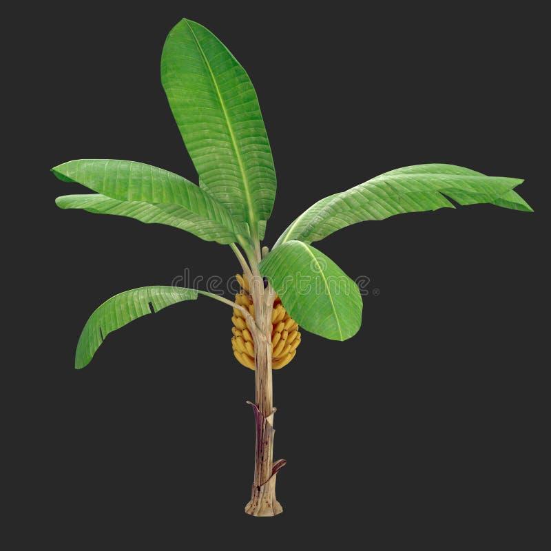 Árvore de banana 01 ilustração do vetor
