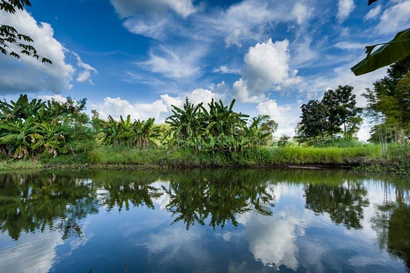 Árvore de banana com ‹do reflection†do ‹do water†imagens de stock