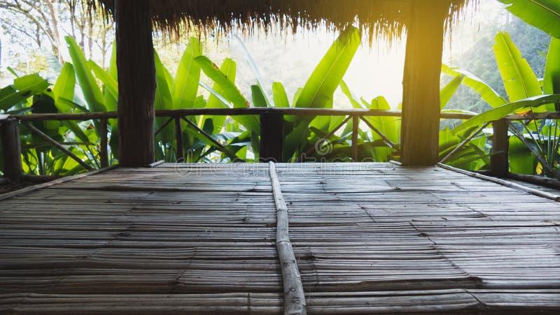 árvore de banana na floresta que olha do interior da cabana com luz solar imagem de stock royalty free