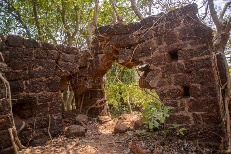 A árvore de banyan da selva enraíza a coberta da parede velha da construção fotografia de stock royalty free