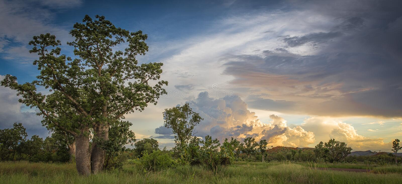 Árvore de Boab e céu tormentoso no Kimberley imagens de stock royalty free