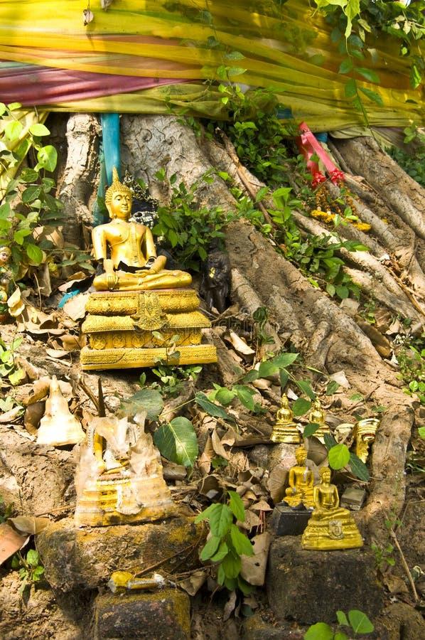 Árvore de Bodhi imagem de stock royalty free