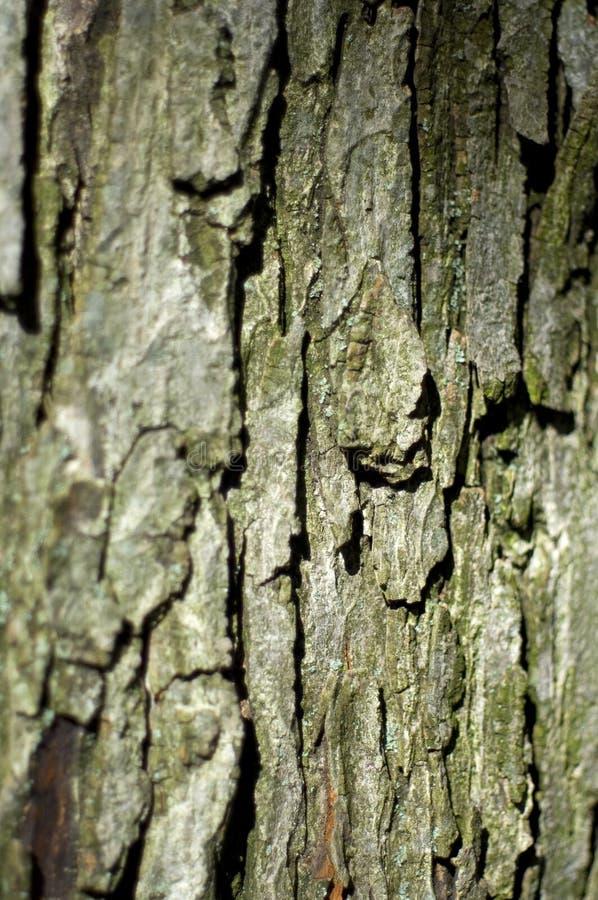 Árvore de bordo foto de stock royalty free