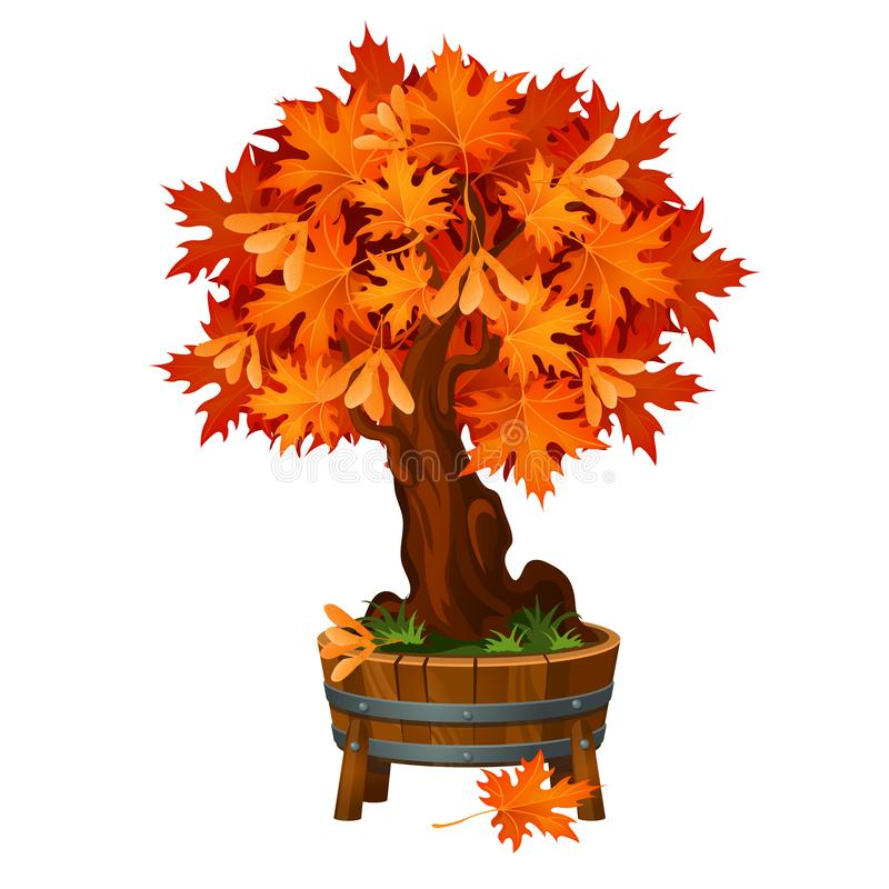 Árvore de bordo dos bonsais em uma cuba ou em um vaso de flores de madeira isolada no fundo branco Árvore decíduo, o símbolo do d ilustração do vetor