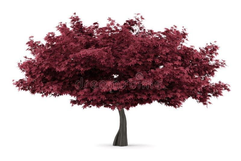 Árvore de bordo vermelho isolada no branco ilustração royalty free