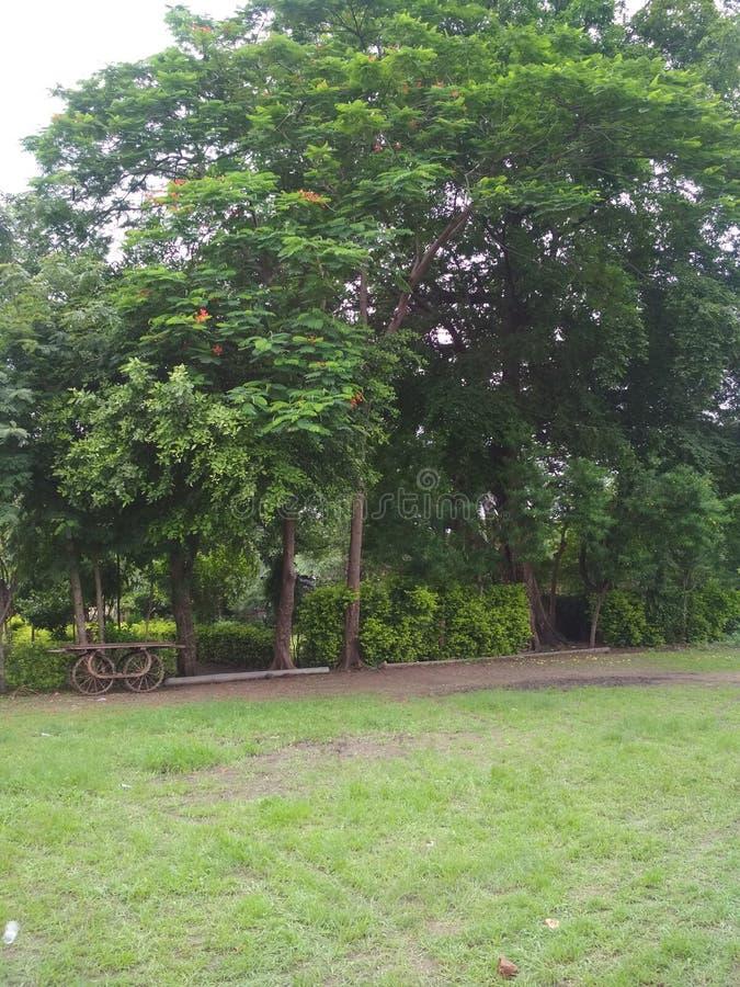 Árvore de Butifull do jardim em meu valige Indore foto de stock