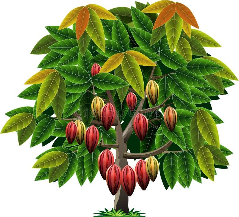 Árvore de cacau do vetor ilustração royalty free