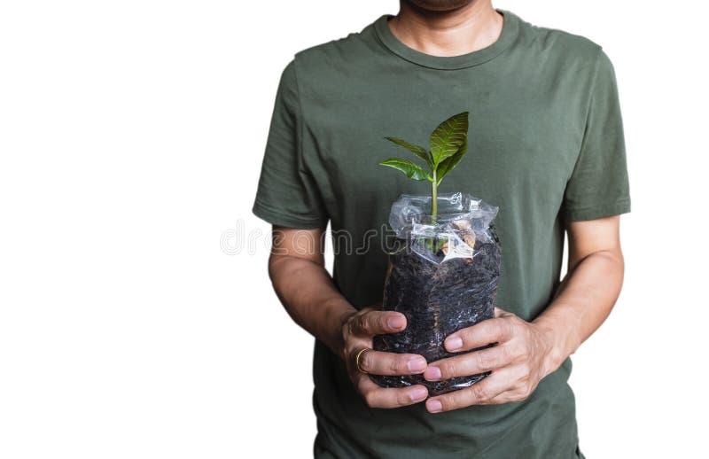 A árvore de caju, planta nova no saco com é solo que realiza em uma mão foto de stock royalty free