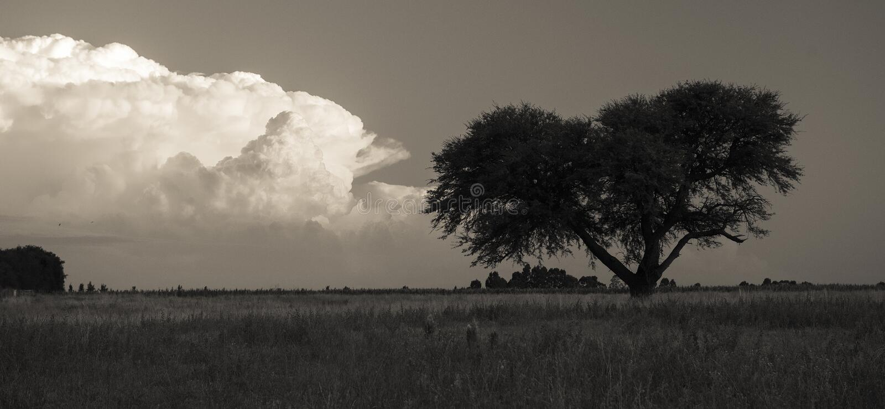 Árvore de Calden, paisagem, fotos de stock royalty free