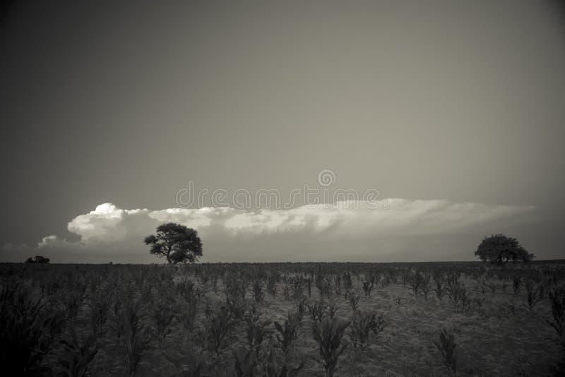 Árvore de Calden, paisagem, imagens de stock royalty free