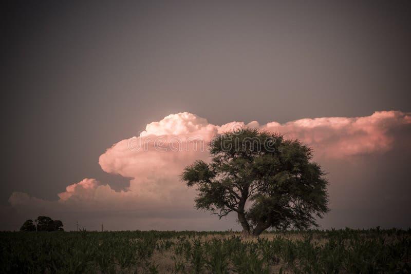 Árvore de Calden, paisagem imagens de stock