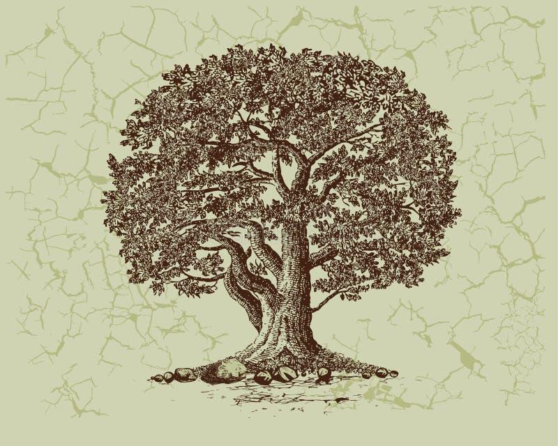 Árvore de carvalho ilustração stock