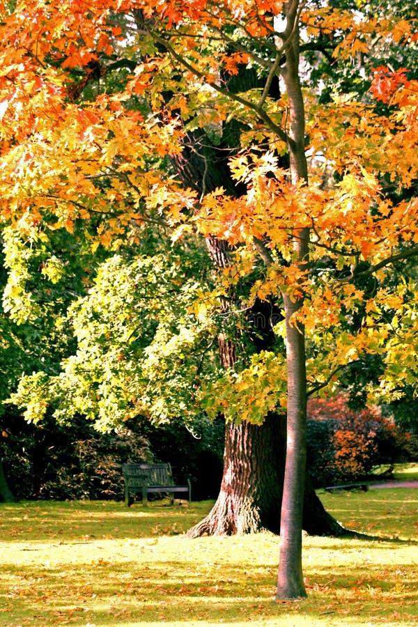 Árvore de carvalho bonita imagens de stock royalty free