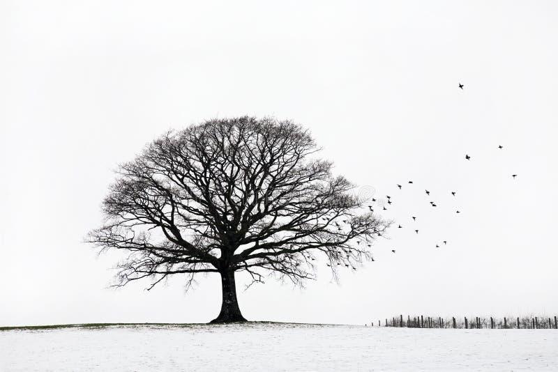Árvore de carvalho no inverno imagem de stock royalty free