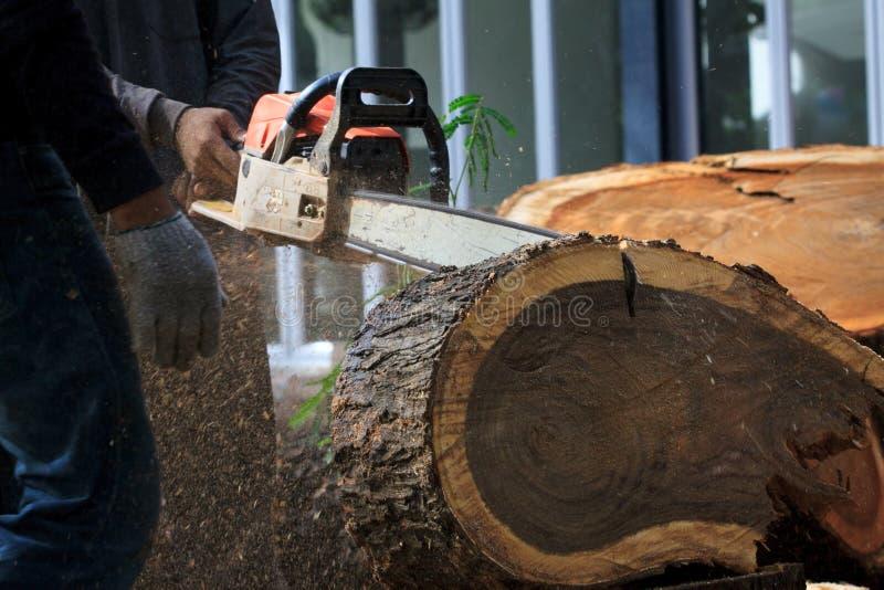 Árvore de casca da estaca do homem do trabalhador pela serra de cadeia foto de stock