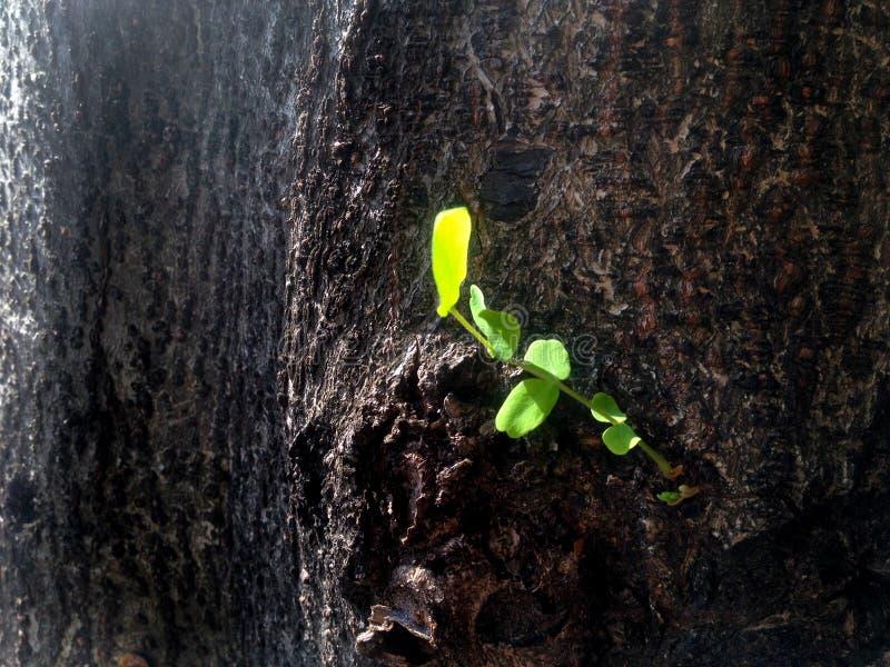 Árvore de casca e folha nova para a textura e o papel de parede foto de stock royalty free