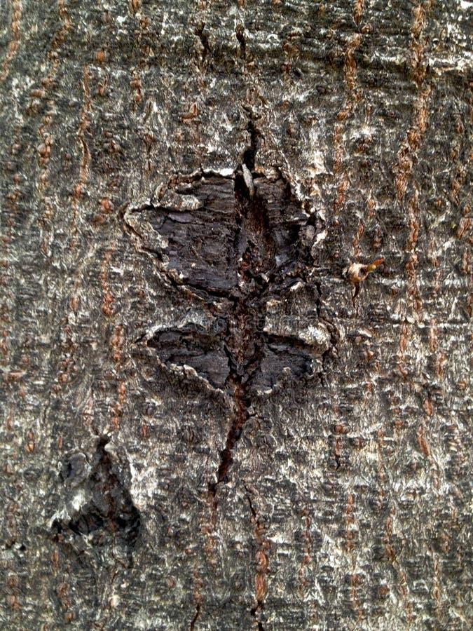 Árvore de casca para a textura e o papel de parede foto de stock royalty free
