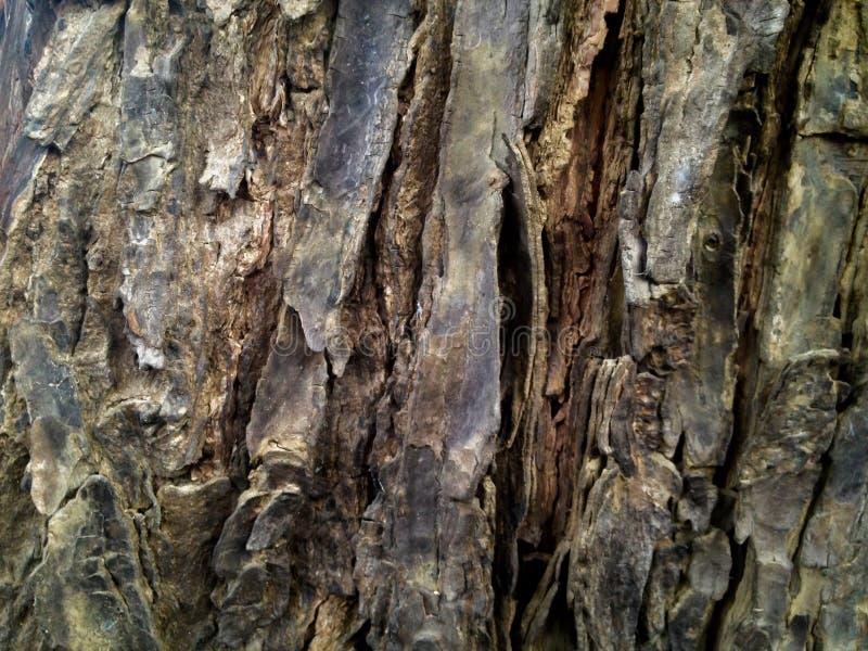 Árvore de casca para a textura e o papel de parede fotografia de stock royalty free