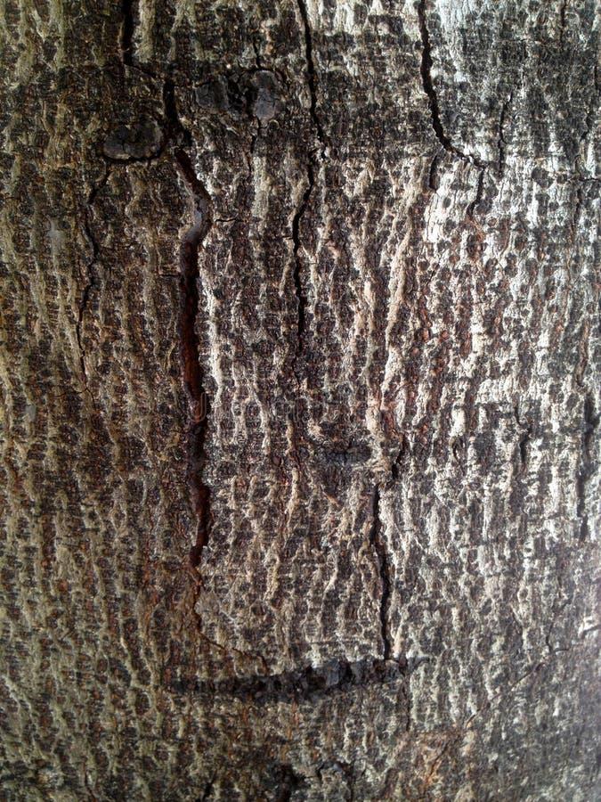 Árvore de casca para a textura e o papel de parede imagens de stock royalty free