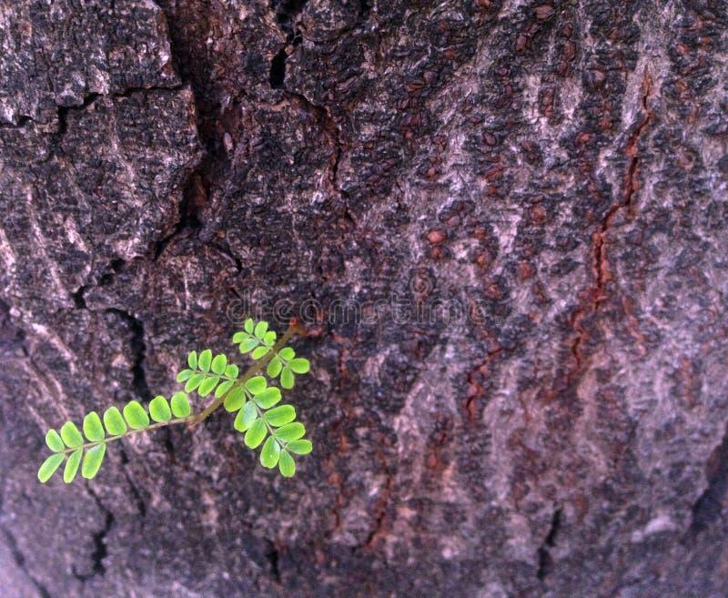 Árvore de casca para a textura e o papel de parede fotos de stock