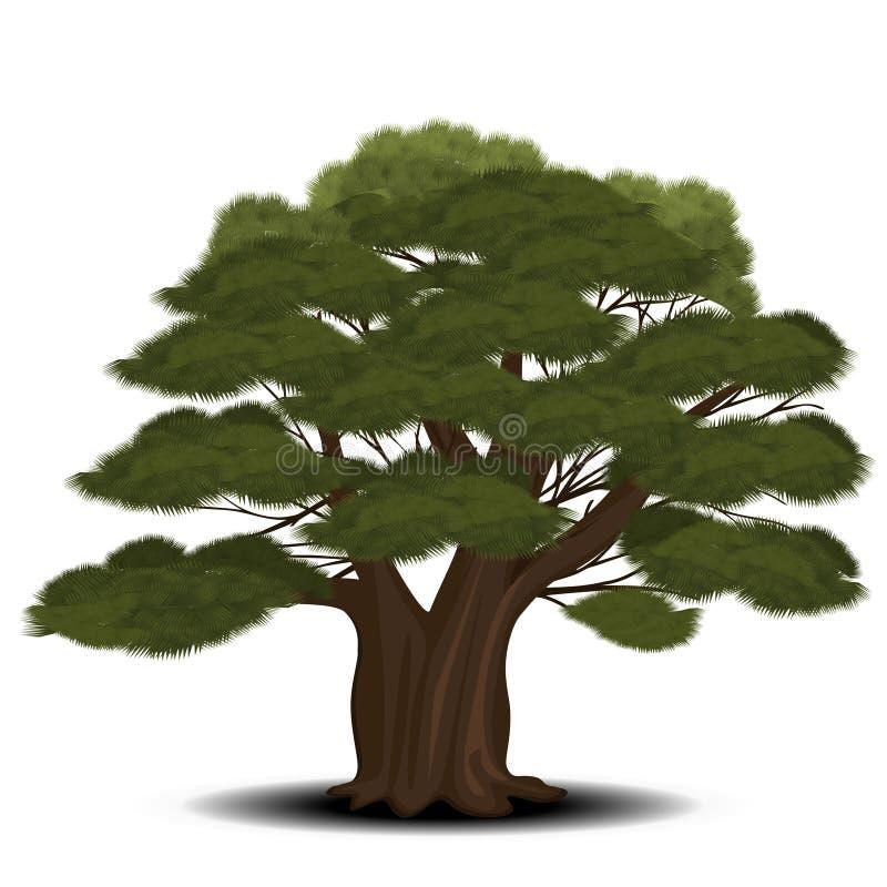 Árvore de cedro com agulhas verdes ilustração stock