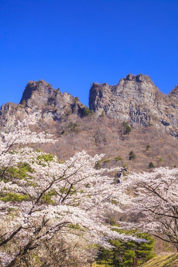 Árvore de cereja e montanha do penhasco fotos de stock