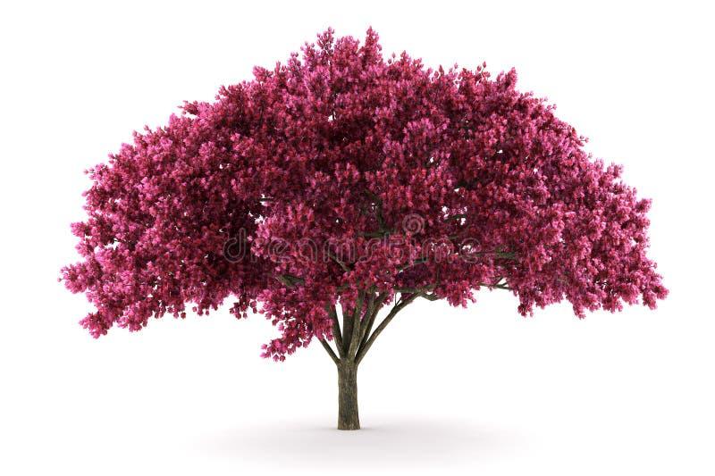 Árvore de cereja isolada no fundo branco ilustração do vetor