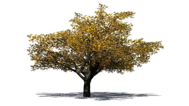 Árvore de cereja no outono ilustração do vetor