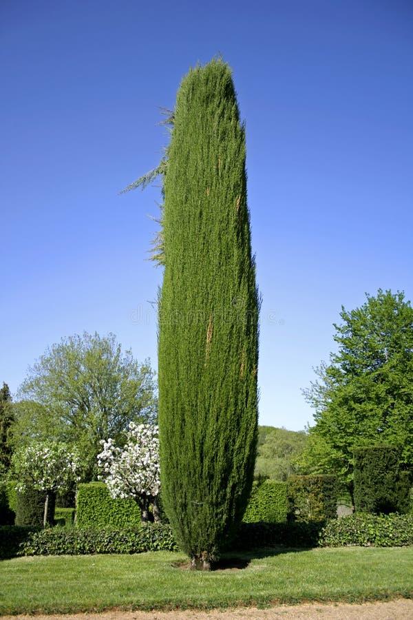 Árvore de Chipre nos jardins foto de stock royalty free