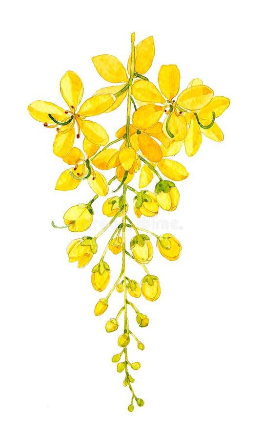 Árvore de chuveiro dourado imagens de stock