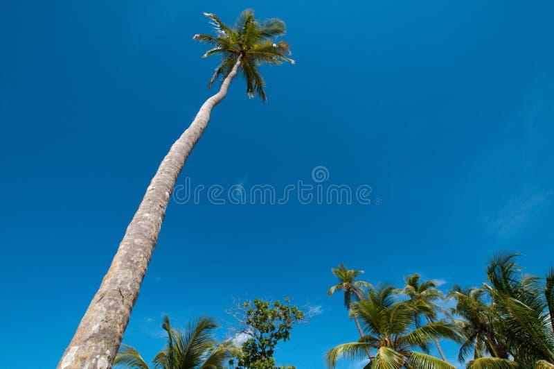 Download Árvore de coco alta imagem de stock. Imagem de ângulo - 16874989