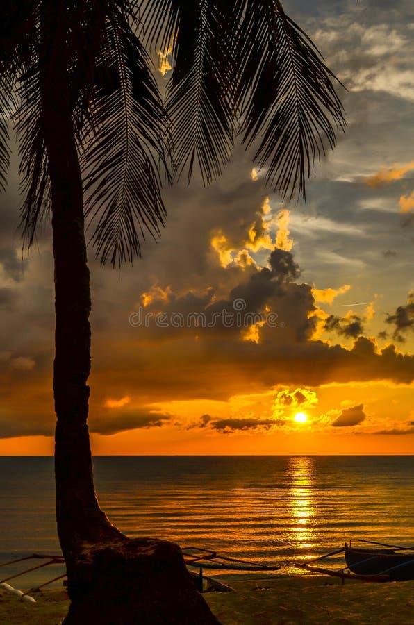 Árvore de coco da praia no por do sol foto de stock royalty free